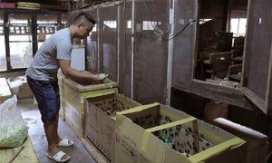 Kiếm 100 triệu mỗi tháng nhờ nuôi dế lấy trứng