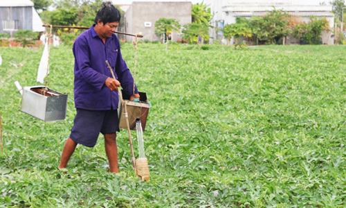 Nông dân miền Tây chế phễu tưới dưa mùa hạn mặn năm trước. Ảnh: Hoàng Nam