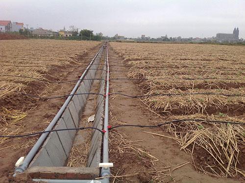 Trang trại của anh Chung được đầu tư bài bản hệ thống tưới.