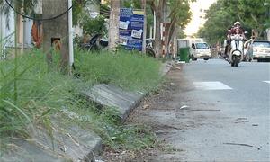 Rác thải, cỏ dại tràn lan ở khu phố tây Đà Nẵng