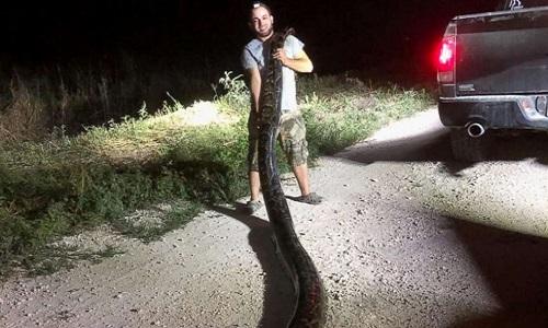 Thợ săn Kyle Penniston chụp ảnh cùng chiến lợi phẩm. Ảnh: SFWMD.