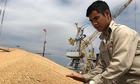 Nhiều nguy cơ phát tán cỏ kế đồng ra môi trường Việt Nam