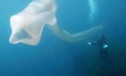 Quái vật giun biển dài 8 m ở New Zealand