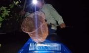 Bơi xuồng vợt cá lìm kìm trong đêm ở Cà Mau