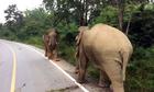 Đôi voi gây tắc đường vì đọ sức giành quyền giao phối