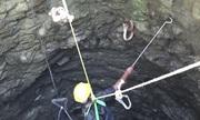 Rơi xuống giếng sâu, rắn hổ mang giận dữ tấn công người giải cứu