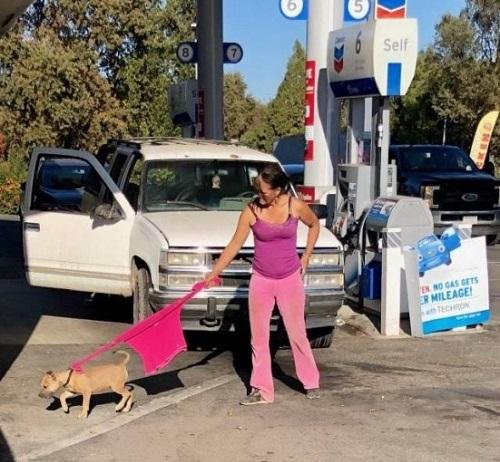 Bí kíp dắt cún cưng đi dạo khi quên mang xích.