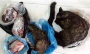 Nữ cán bộ xã đăng bán thịt thú rừng trên Facebook