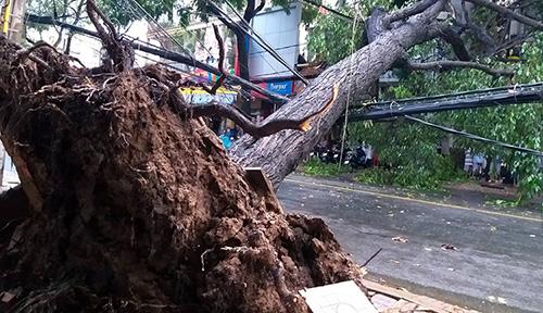 Cây sao ngã chắn ngang đường Nguyễn Trãi, ở TP Cần Thơ trong cơn mưa giông chiều 17/11. Ảnh: Hưng Lợi