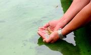 Tảo nổi xanh hồ cấp nước sinh hoạt ở Bà Rịa - Vũng Tàu