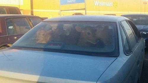 Gia đình nhà hươu đi mua sắm.