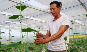 Lão nông 60 tuổi tại Phú Thọ tự làm nhà kính trồng rau sạch