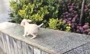 Chó con chơi trượt máng trên thành cầu thang ở Trung Quốc