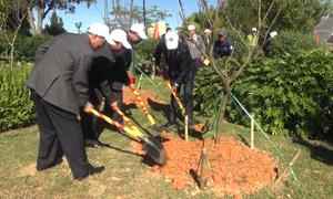 Đà Lạt trồng 125 cây anh đào do Nhật Bản trao tặng