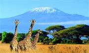 Ngọn núi cao nhất châu Phi thuộc nước nào?