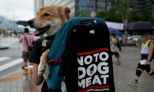 Một thanh niên Hàn Quốc khoác balô đựng chó ghi khẩu hiệu Nói không với thịt chó trên đường phố Seoul. Ảnh: AFP.