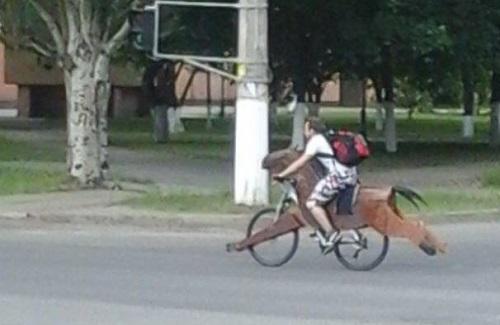 Khi bạn muốn cưỡi ngựa nhưng bố mẹ lại bắt đi xe đạp.
