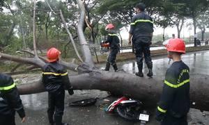 Mưa hoành hành Sài Gòn, cây đổ đè người đi đường tử vong