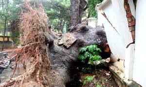Hơn 100 cây xanh bật gốc, đường phố Vũng Tàu ngổn ngang sau bão