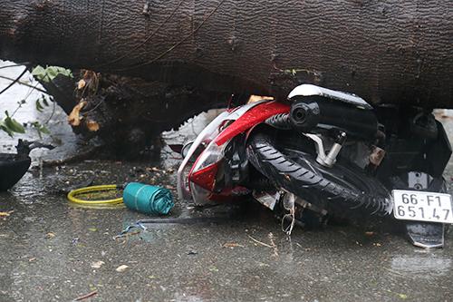 Cây đổ trong trận mưa đè người đi đường tử vong. Ảnh: Phạm Duy.