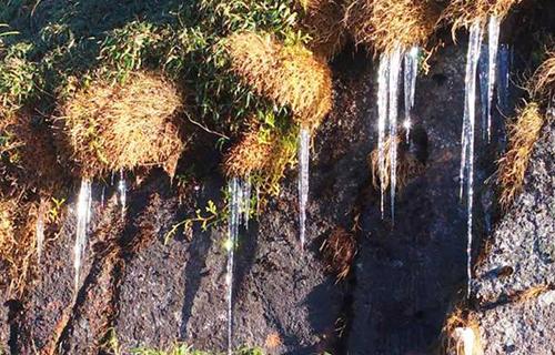 Tại các sườn núi ở Fansipan, nước nhỏ giọt, gặp nhiệt độ dưới 0 kết thành dải băng. Ảnh: CTV