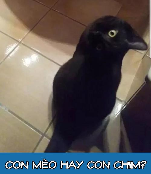 Nhiều người nói đây là mèo chứ không phải chim, còn bạn?