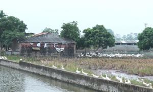 Dự án nuôi trồng thủy sản 12 tỷ đồng ở Hà Nam bị bỏ hoang