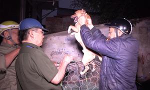 Đội bắt chó thả rông ở Hà Nội