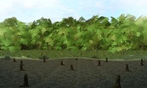 Rừng Amazon bị hủy diệt ở tốc độ nhanh nhất trong 10 năm