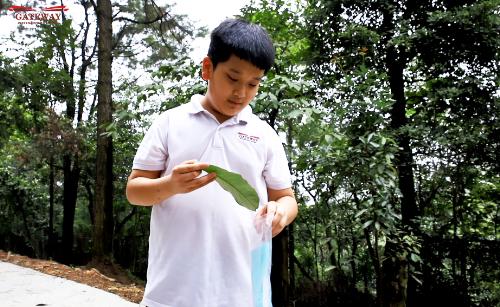 Nếu như các bạn học sinh lớp 6 tiến hành sưu tầm lá cây gân hình, lá mọc đối, mọc cách và tìm hiểu về lá đơn, lá kép thì chuyến dã ngoại lần này, các Gisers khối 7 sẽ tìm và lưu lại hình ảnh của các loại côn trùng. Đặc biệt, với hoạt động tự khám phá rừng trong khu vực cho phép, nhiều học sinh đã được các chú kiểm lâm chia sẻ, giải đáp các thắc mắc về rừng cũng như kỹ năng sinh tồn khi đi rừng.