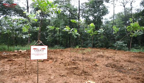 Những hàng cây đầu tiên được trồng lên bởi thầy trò trường Gateway.