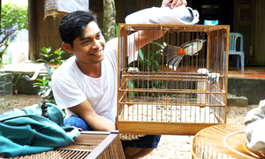 Khu vườn 400 m2 dành nuôi 100 lồng chim của chàng trai Tà Mun