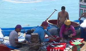 Ngư dân Lý Sơn bỏ nghề đi biển vì ngư trường dần cạn kiệt