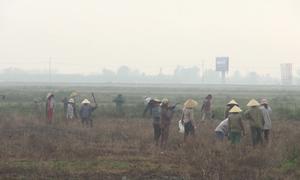 Huyện ở Quảng Bình mua chuột với giá 2.000 đồng mỗi con