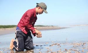 Hàng trăm người nhặt ốc viết dọc bãi biển ở Bến Tre