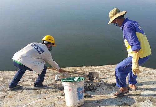 Công nhân thu gom cá chết tại hồ điều hòa Cửa Nam chiều 3/12. Ảnh: Nguyễn Hải.