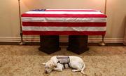 Chú chó nằm canh linh cữu cố tổng thống Bush