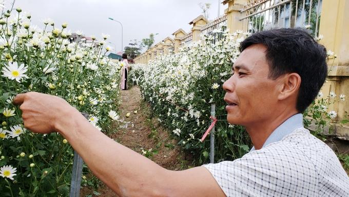 Hộ dân ở Hải Dương kiếm tiền triệu mỗi ngày nhờ vườn cúc hoạ mi