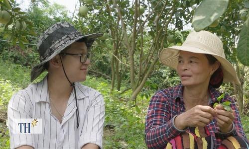 Người phụ nữ trồng 500 cây bưởi nuôi con ăn học thành tài