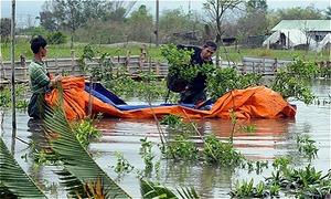 Nông dân Sài Gòn trồng lại hoa Tết sau bão Usagi