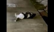 Trăn siết chết mèo trên vỉa hè ở Singapore