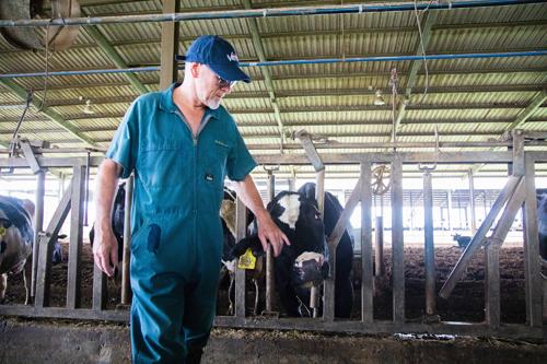 Chuyên gia nước ngoài trực tiếp thực hiện và giám sát quá trình tách đàn bò A2 tại TH