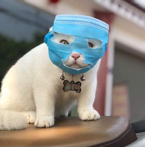 Ninja meo meo.