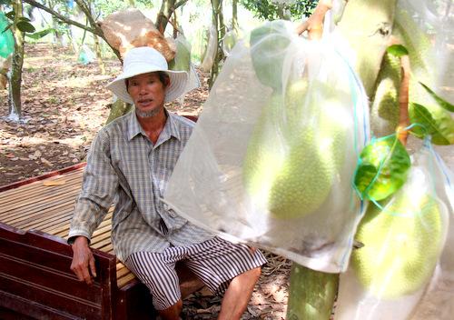 Người dân Bà Rịa – Vũng Tàu mang giường ra vườn ngủ canh trộm mít