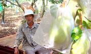 Người dân Bà Rịa - Vũng Tàu mang giường ra vườn ngủ canh trộm mít