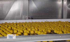 Dây chuyền sản xuất trứng ăn liền 40.000 quả một giờ
