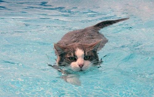 Image result for tại sao mèo sợ nước