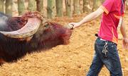 Từ năm 2020 vật nuôi phải được đối xử nhân đạo
