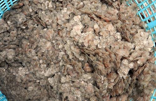 Vải cá tại các cơ sở chế biến khô được thu gom, chờ thương lái tới mua. Ảnh: Hưng Lợi