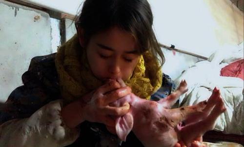 Xiao Fang hô hấp nhân tạo cho lợn con. Ảnh: Peoples Daily
